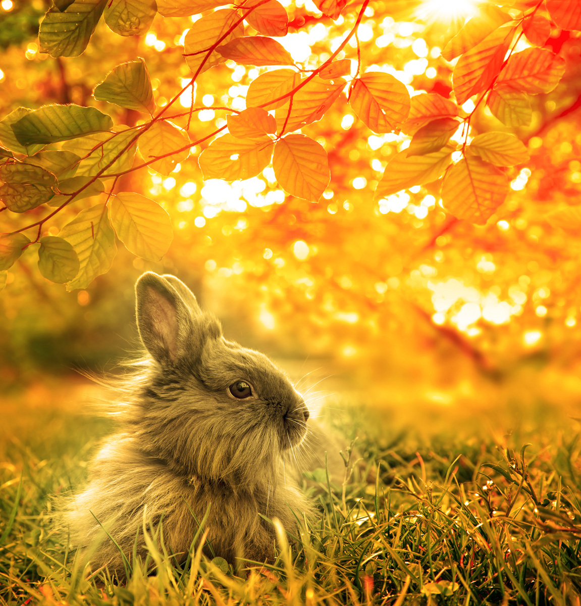 autumnal rabbit. Beautiful Art Design  background